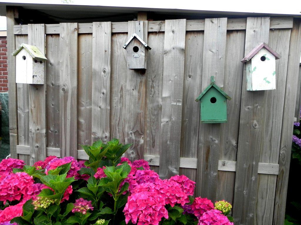 schutting, gluren in de tuin