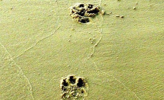 hond, verder zonder je hond, afscheid hond, Jack Russell, blog, lifestyle blog, La Log