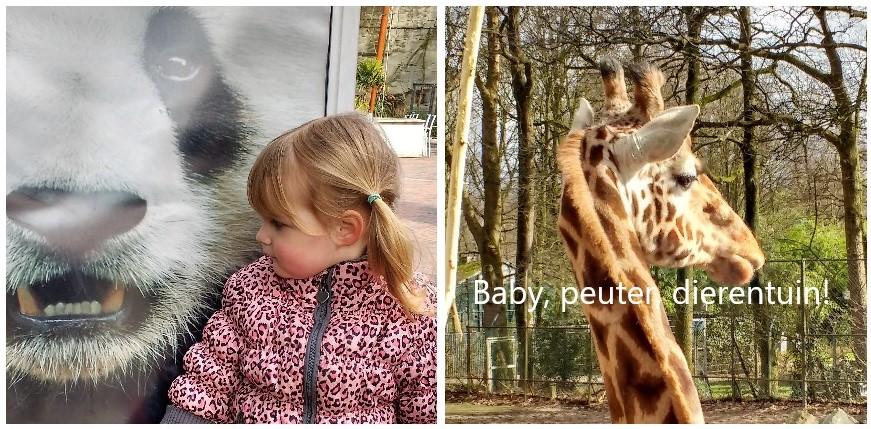 baby peuter... dierentuin