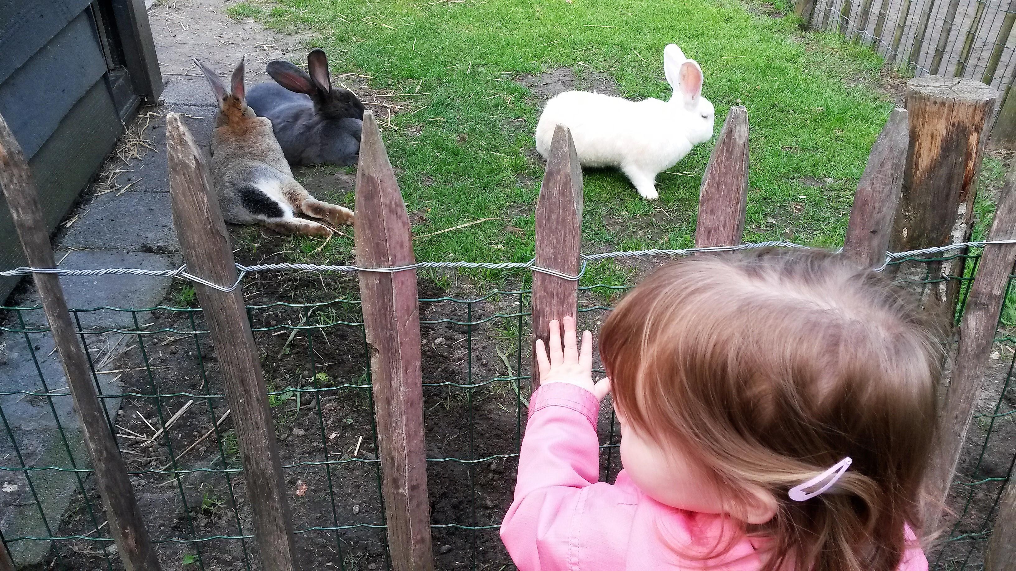kinderboerderij, boerderij, dieren, Wolfslaar, Breda, kinderen, gezin, uitje, blog, mamablog, mamalifestyle blog, La Log