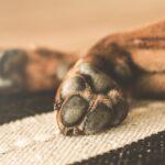 honden, hond, loslopen, angst, bang voor honden, artikel, blog, lalog.nl